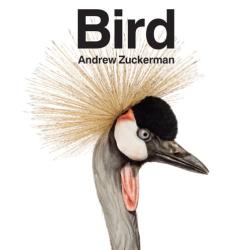 : Bird