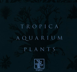 Holger Windelov: Aquarium Plants Catalogue