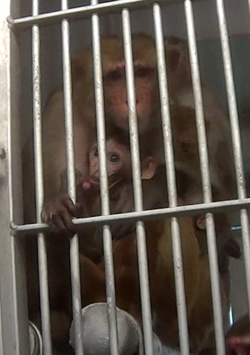 Primates at Texas Biomed