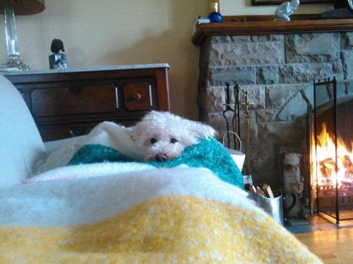 Rufus the dog semi asleep