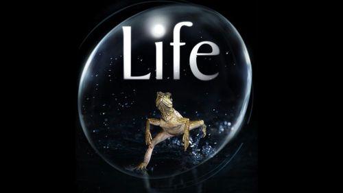 'Life', la espectacular serie documental de la BBC, se estrena en La 2