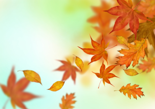 Autumn_Leaves-Falling