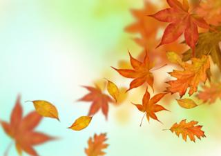 Autumn_Leaves-Falling