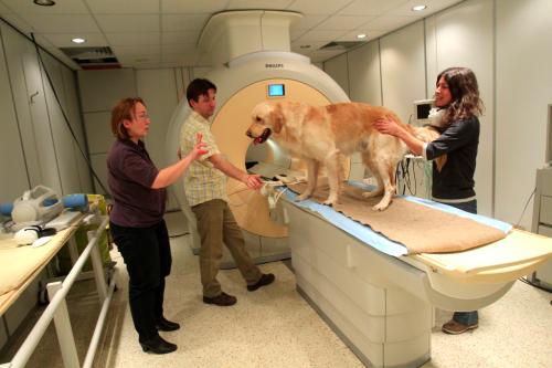 dogs in MRI