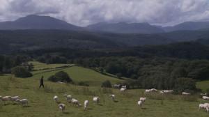 Sheep-300x168