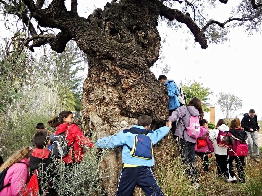 Proyecto de investigación: El Olivo. Colegio Público 'Ramón y Cajal' de Alpartir |  Fondo documental del Centro.