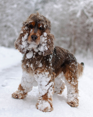 150754-Dog-Covered-In-Snow
