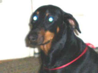 Return hound 1