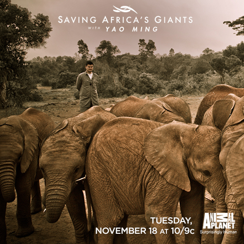Saving-africas-giants3-tunein-500x500.jpg