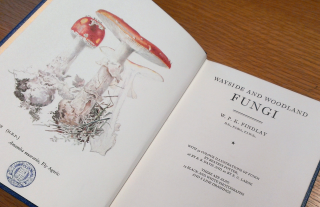 Beatrix Potter's illustration