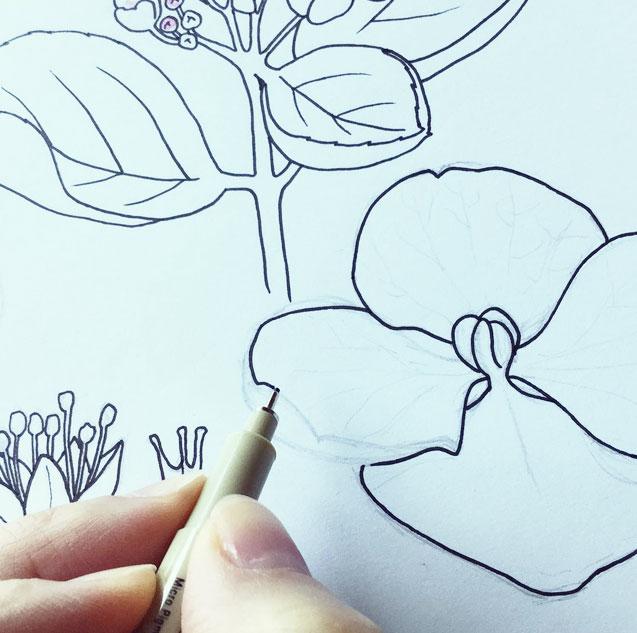 Karinka's botanical sketch