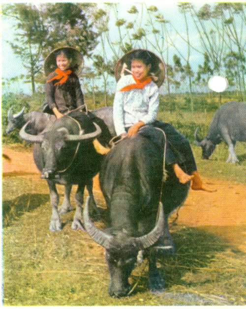 Picture on the front of the postcard of 1968 shown above.