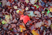 Leaf-2886341_640