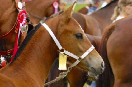 Arlington Park Horse Racing in Chicago