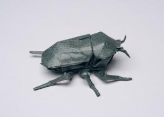 Chrysina_beetle