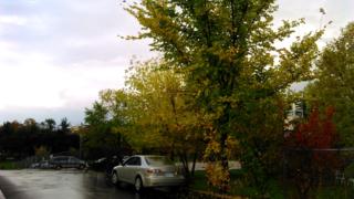 York Woods driveway