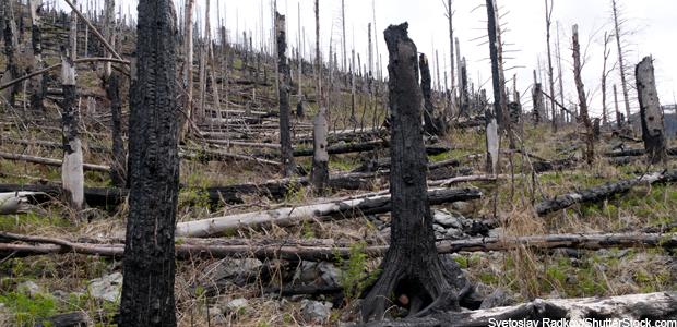 Burnt ecosystem