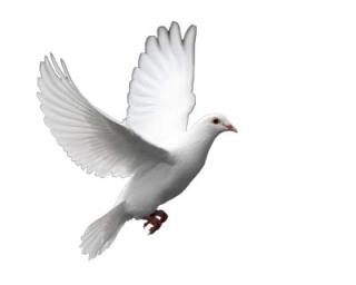 Dove-dream