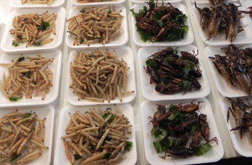 Cooked worms and insects at a market in Thailand